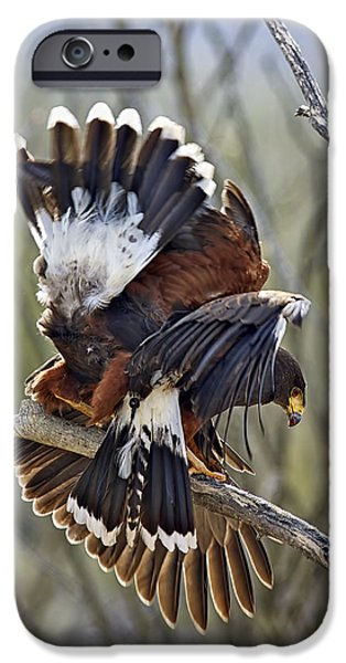 Hawk Art Print iPhone Cases - Family Food Fight iPhone Case by Phill  Doherty