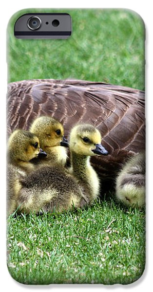 Family Gathering iPhone Case by Dana Bechler