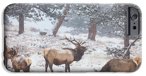 Wildlife Photographer iPhone Cases - Family Man iPhone Case by Darren  White