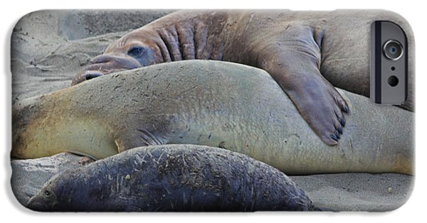 Elephants iPhone Cases - Family Naptime iPhone Case by Kris Hiemstra
