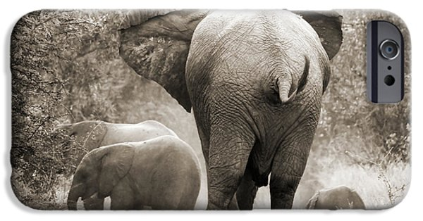 Elephants iPhone Cases - Family of elephants iPhone Case by Delphimages Photo Creations