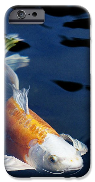 Fish Pond iPhone Cases - Fantail Girl iPhone Case by Rebecca Cozart