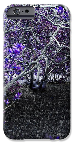 Mangrove Forest iPhone Cases - Fantasywood iPhone Case by Fabian Roessler