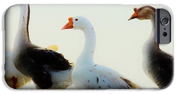 Lynda Dawson-youngclaus Photographer iPhone Cases - Farm Geese 2 iPhone Case by Lynda Dawson-Youngclaus