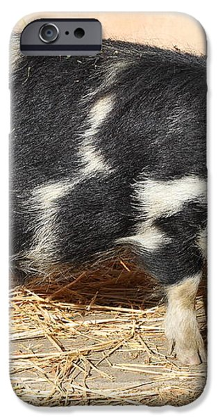 Farm Pig 7D27356 iPhone Case by Wingsdomain Art and Photography