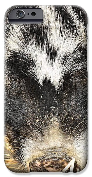 Farm Pig 7D27361 iPhone Case by Wingsdomain Art and Photography