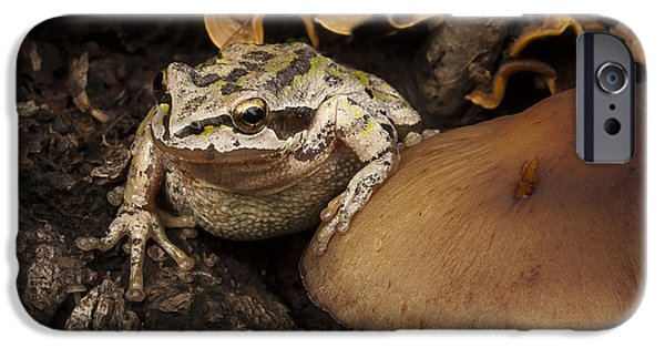 Anuran iPhone Cases - Fat Frog iPhone Case by Jean Noren