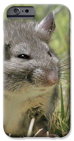 Fat Norway Rat iPhone Case by Christine Till