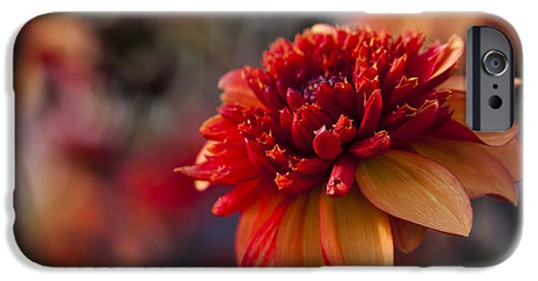 Close Up Floral iPhone Cases - Fata Morgana iPhone Case by Anne Gilbert