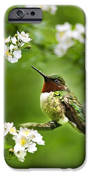 Hummingbird iPhone Cases - Fauna and Flora - Hummingbird with Flowers iPhone Case by Christina Rollo