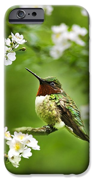 Fauna iPhone Cases - Fauna and Flora - Hummingbird with Flowers iPhone Case by Christina Rollo
