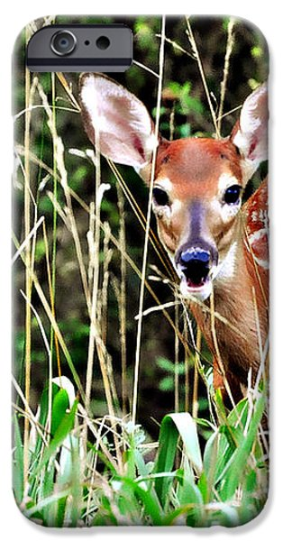 Fawn In The Grass iPhone Case by Marty Koch