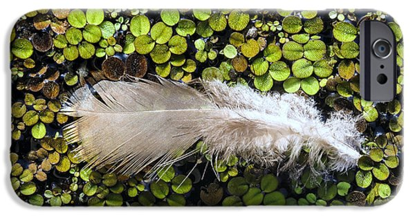 Abstract Photographs iPhone Cases - Feather on the duckweed iPhone Case by Zina Stromberg