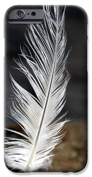 Sea Birds iPhone Cases - Feather iPhone Case by Valerie Collins