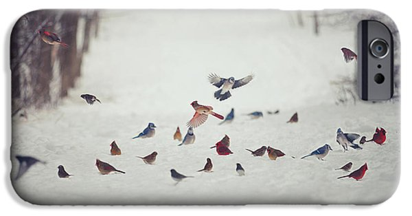 Animals Photographs iPhone Cases - Feathered Friends iPhone Case by Carrie Ann Grippo-Pike