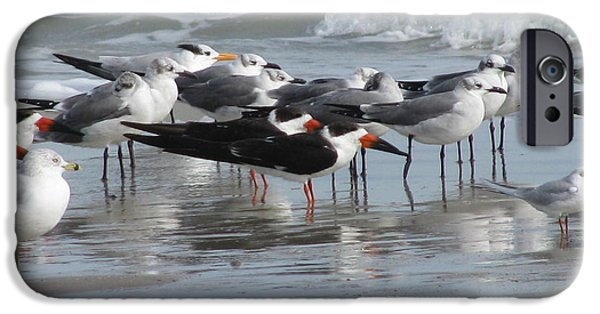 Sea Birds iPhone Cases - Feathered Friends iPhone Case by Ellen Meakin
