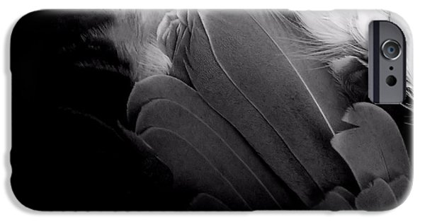 Business Photographs iPhone Cases - Feathers 6 iPhone Case by Newel Hunter