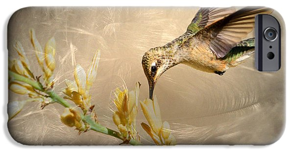 Flight iPhone Cases - Feathers iPhone Case by Donna Kennedy