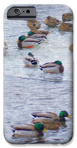 Winter Wonderland Drawings iPhone Cases - February  And Cold Ducks iPhone Case by Rosemarie E Seppala