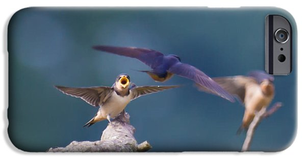 Barn Swallow iPhone Cases - Feed me iPhone Case by Davidmark Images