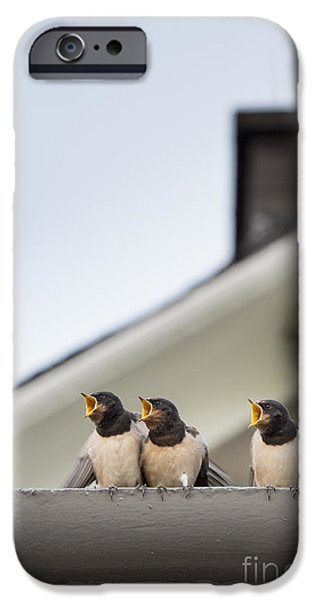Hirundo iPhone Cases - Feed Me  iPhone Case by Tim Gainey