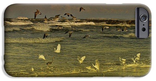 Flying Seagull iPhone Cases - Feeding Frenzy iPhone Case by Deborah Benoit