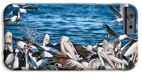 Seagull iPhone Cases - Feeding Frenzy V2 iPhone Case by Douglas Barnard