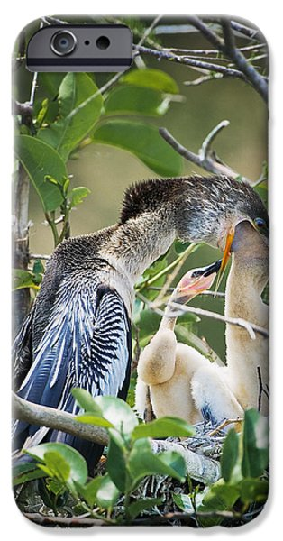 Baby Bird iPhone Cases - Feeding iPhone Case by Patrick M Lynch