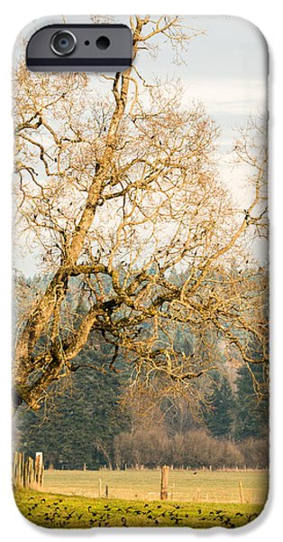 Tree Art Print iPhone Cases - Feeding The Birds iPhone Case by Claude Dalley