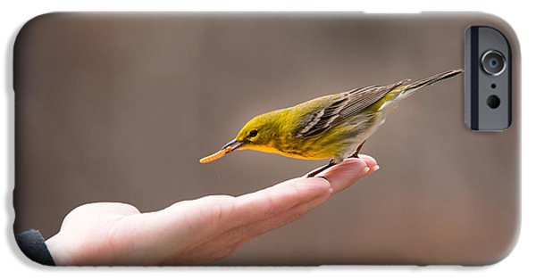 Pines iPhone Cases - Feeding Time - Pine Warbler iPhone Case by Christy and Bruce Cox