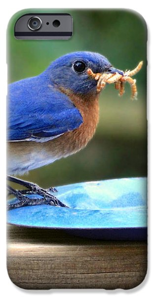 Fauna iPhone Cases - Feeding Time iPhone Case by Sue Melvin