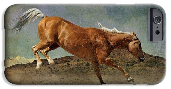 American Quarter Horse iPhone Cases - Feeling Frisky iPhone Case by Karen Slagle