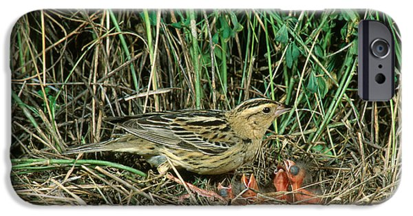 Caring Mother iPhone Cases - Female Bobolink At Nest iPhone Case by Anthony Mercieca