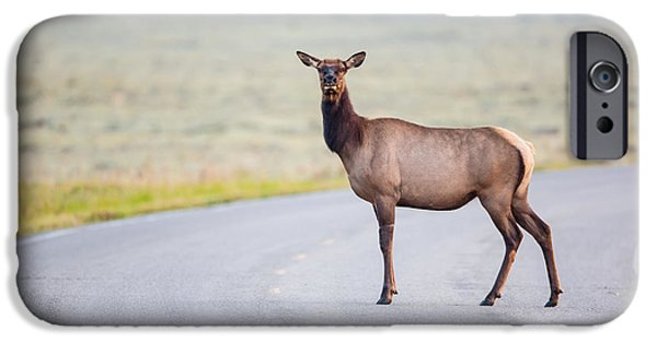 Male iPhone Cases - Female Elk Crossing the Road at Yellowstone iPhone Case by Andres Leon