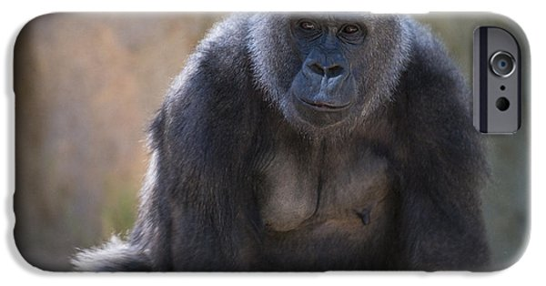Ape iPhone Cases - Female Gorilla iPhone Case by Garry Gay