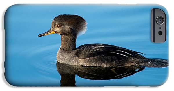 Explore Pyrography iPhone Cases - Female Hooded Merganser iPhone Case by Michael Bennett
