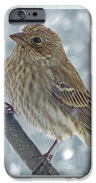 Small iPhone Cases - Female House Finch in Snow iPhone Case by Debbie Portwood