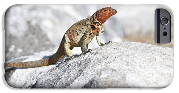 Shed iPhone Cases - Female Lava Lizard iPhone Case by William H. Mullins