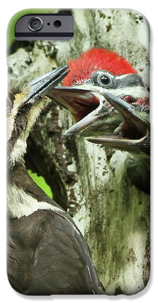 Female Pileated Woodpecker at nest iPhone Case by Mircea Costina Photography