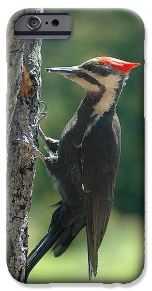Sandra Updyke iPhone Cases - Female Pileated Woodpecker iPhone Case by Sandra Updyke