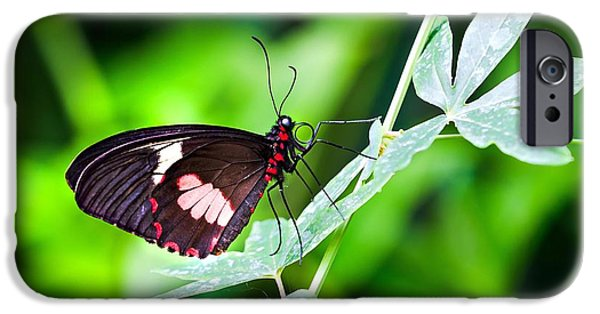 Vine Leaves iPhone Cases - Female Pink Cattleheart butterfly iPhone Case by Jane Rix