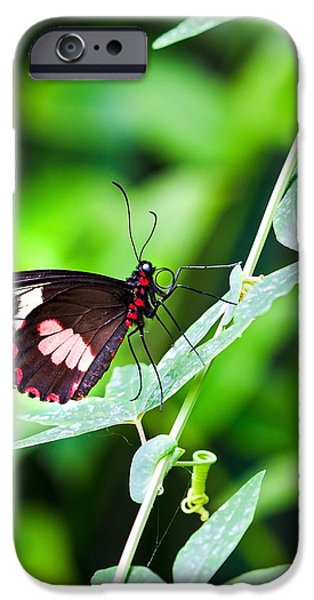 Female Pink Cattleheart butterfly iPhone Case by Jane Rix
