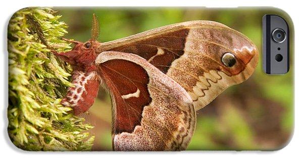 Promethea iPhone Cases - Female Promethea Moth iPhone Case by Gregory K Scott