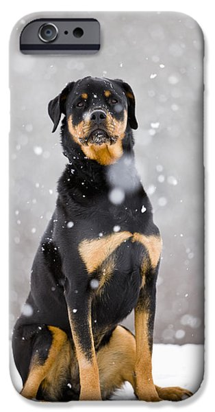 Pet Photography iPhone Cases - Female Rottweiler Sitting On Top Of A iPhone Case by Jim Craigmyle