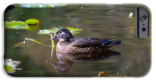 Beaver Lake iPhone Cases - Female Wood Duck iPhone Case by Terry Elniski