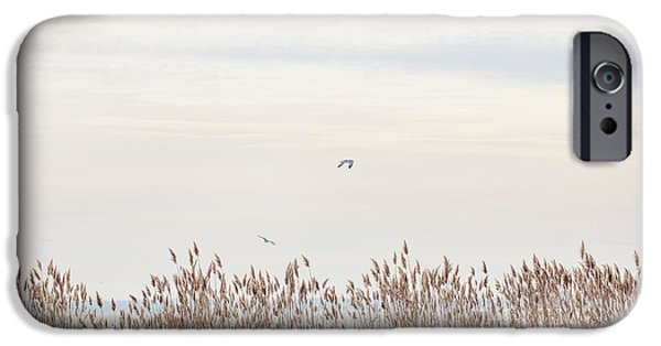 Flying Seagull iPhone Cases - Fenced In iPhone Case by June Marie Sobrito