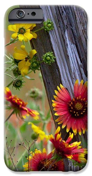 Fenceline Wildflowers iPhone Case by Robert Frederick