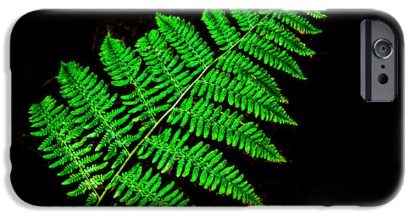 Haybale iPhone Cases - Fern Frond II iPhone Case by Robert Bales