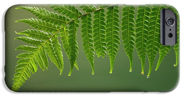 Forest Detail iPhone Cases - Fern Frond With Drip Tips iPhone Case by Pete Oxford