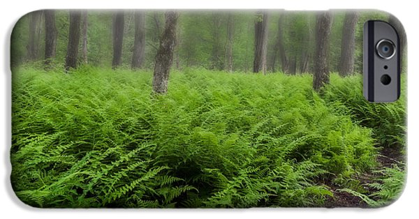 Southern New England iPhone Cases - Fern of the Fog iPhone Case by Bill  Wakeley